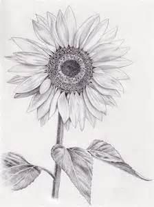 Best Studio C Sketches by Best 25 Sunflower Drawing Ideas On Sunflower