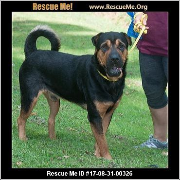 rottweiler rescue virginia west virginia rottweiler rescue adoptions rescueme org