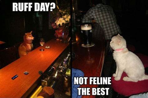 top cat bar ruff day