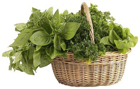 Green Leaf Renzo Basket 383 herbs png clipart png mart