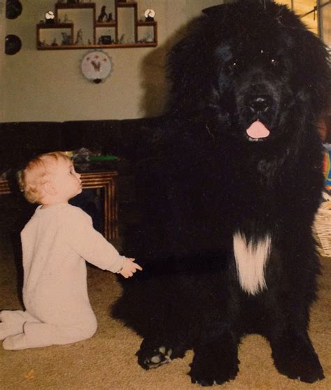 dogs that are with children 22 and their big dogs