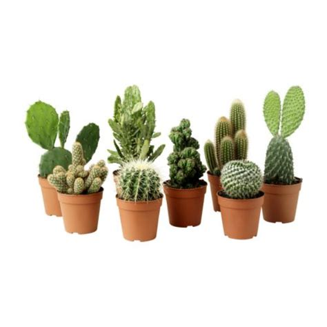 small potted plants cactaceae potted plant ikea
