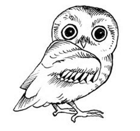 elf owl coloring pages elf owl coloring page hot girls wallpaper