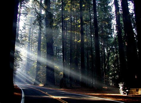 best ave california road trip 2011 day 3 avenue of the giants ca
