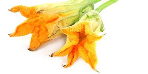 fiori di zucchina come cucinarli fiori di zucca propriet 224 calorie e come cucinarli al meglio