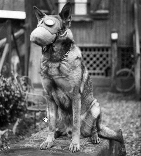 puppy gas wwi cross with gas mask 1917 flickr photo
