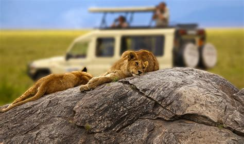 5 Safari Stuff To See by Tanzania Expeditions Tanzania Safari