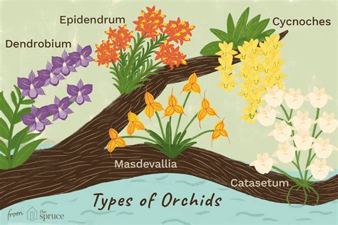 types  orchids    houseplants