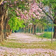 Wallpaper Custom Tema Alam 1 pemandangan alam wallpaper custom 3d