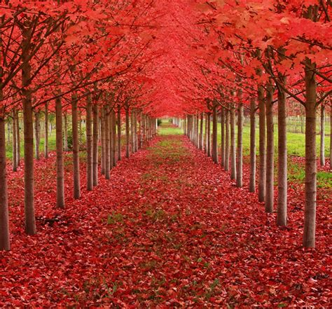the sixteen trees of the 16 most beautiful trees in the world