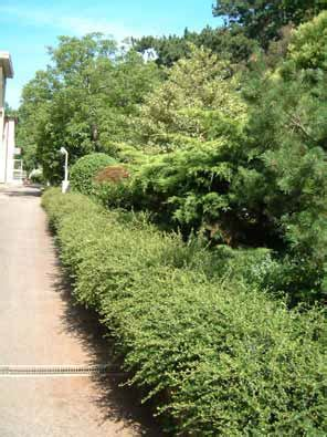 casa di cura trieste clienti e lavori vivai 193 verde pubblico e privato