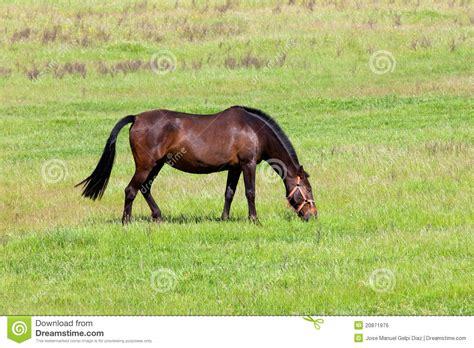 nice hourse nice horse royalty free stock image image 20871976