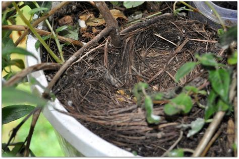 mother s day gift will result in empty nest