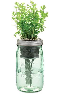 diy indoor mason jar herb garden homestead gardens