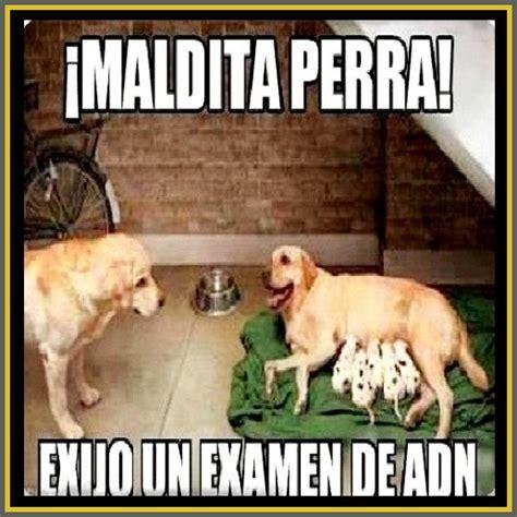 imagenes animales grasiosos imagenes de perros chistosos con frases graciosas para