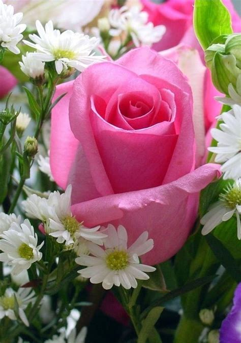 imagenes de flores para descargar espectaculares fotos de rosas preciosas para wallpaper