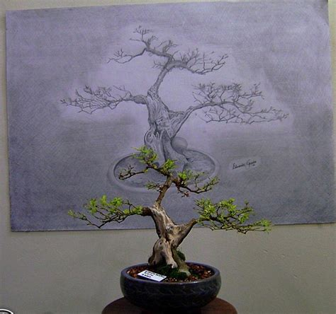 66 best images about bonsai drawing on bonsai trees tree drawings and dibujo simple bonsai drawing www imgkid com the image kid has it
