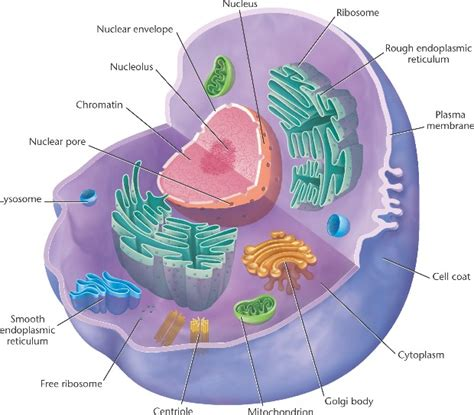 diagram of a cell membrane science and socal studies