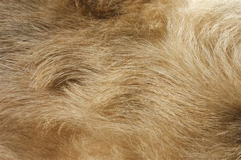 do dogs hair or fur fur www pixshark images galleries with a bite