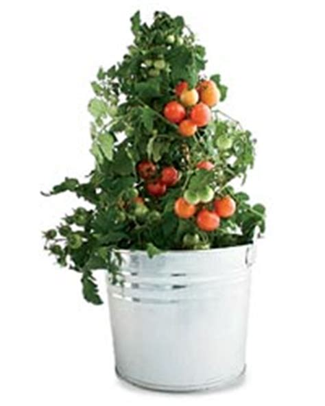 Portable Tomato Planter by From The Garden Portable Planters Food Wine
