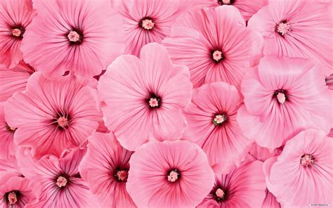 Flower Wallpaper And Backgrounds | free wallpaper free flower wallpaper beautiful flower