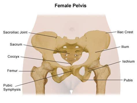 pelvic bone diagram labelled diagram of the pelvis diagram of