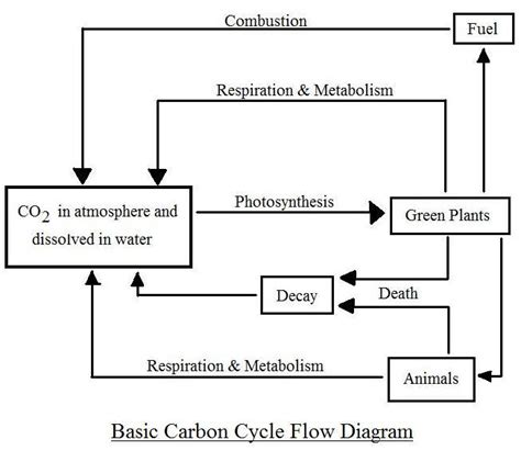 cycle of a flowchart oxygen cycle flow chart