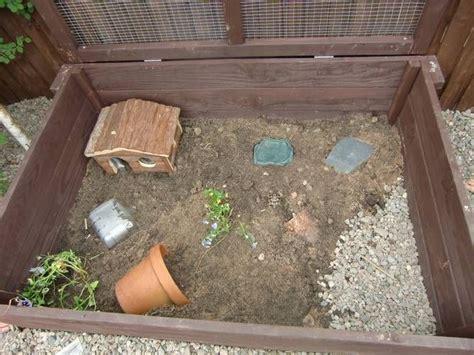 images  desert tortoise  pinterest tortoise
