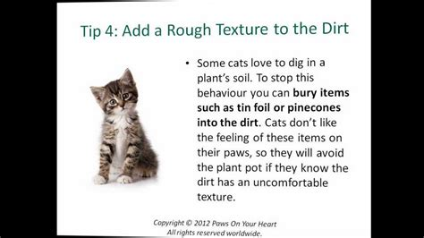 how to keep a cat out of a room cat behaviour problems 5 tips to keep your cat out of the houseplants