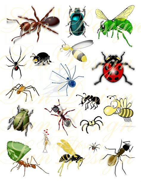 clipart collection free bug collection clipart