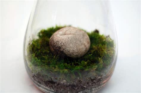 make a moss terrarium for low maintenance greenery lifehacker australia