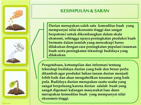 Bibit Buah Bit produksi penyimpanan bibit durian