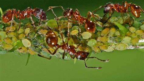 was tun bei ameisen in der wohnung was tun gegen ameisen in der wohnung wohnen
