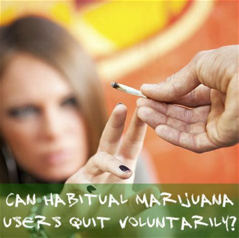 Voluntarily Admitt Themselves For Detox by Can Habitual Marijuana Users Quit Voluntarily Cannabis