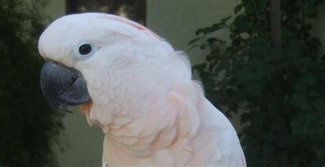tucson parrot rescue
