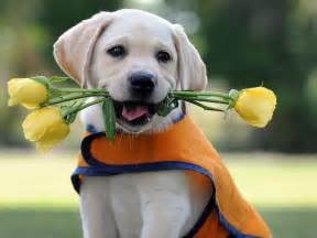 Cute dog aww cute dog with flowers