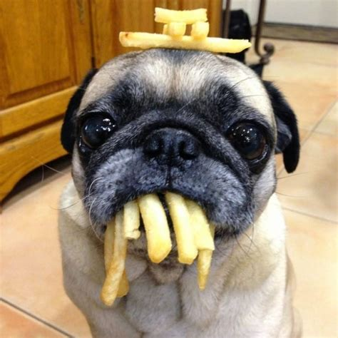 can dogs eat fries 5 surprising things from your food a can eat the planet of pets animals