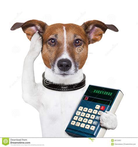 puppy calculator successful accountant stock image image 28710351