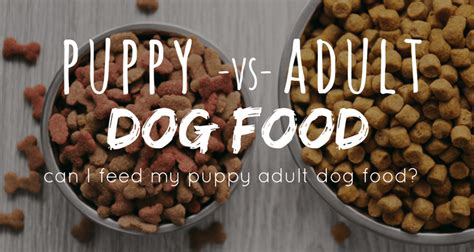 can puppies eat cat food can puppies eat food puppy vs nutrition