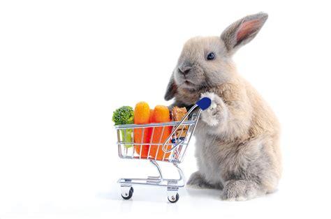 coniglio alimentazione il coniglio consigli su alimentazione e denti