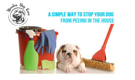 what stops dogs from peeing in the house the best way to stop your dog from peeing in the house wonderdoggear org