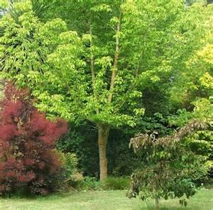 Garden Trees Garden Path