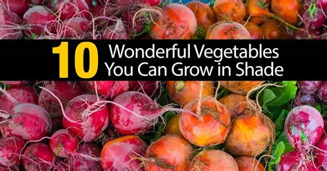 vegetables that grow in shade 10 wonderful vegetables you can grow in shade