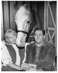 theme song mr ed 1000 images about mr ed on pinterest mister ed alan