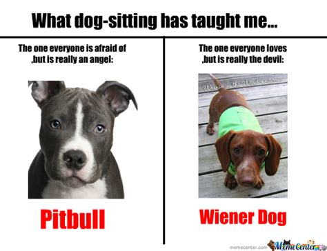 Pitbull Memes - pitbulls and wiener dogs by nyandeerxd meme center