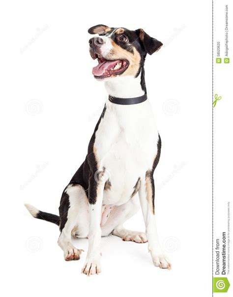 young crossbreed happy mixed breed dog looking to side stock photo image