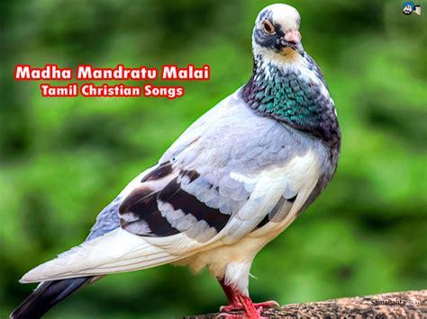wedding song jesus tamil christian wedding songs free jesus all