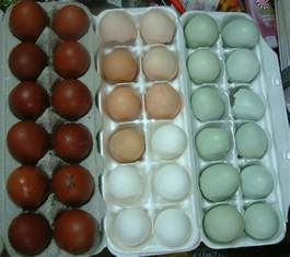 what color are blue eggs chickens that lay blue eggs