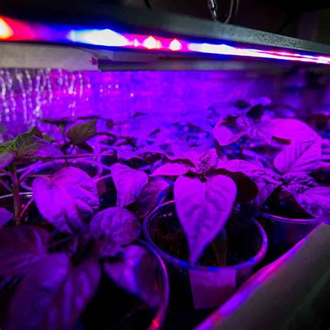 plant grow light l the best led grow lights jan 2018 green and vibrant