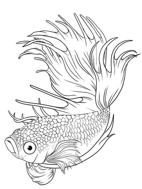 herring fish coloring page betta fish coloring pages 2 herring fish coloring page